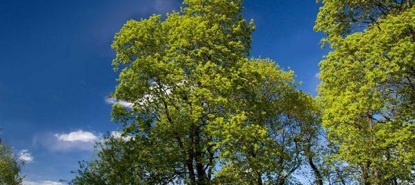 tree-removal-whanganui-4