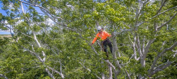 tree-removal-christchurch