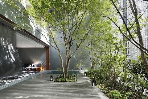 small-garden-trees