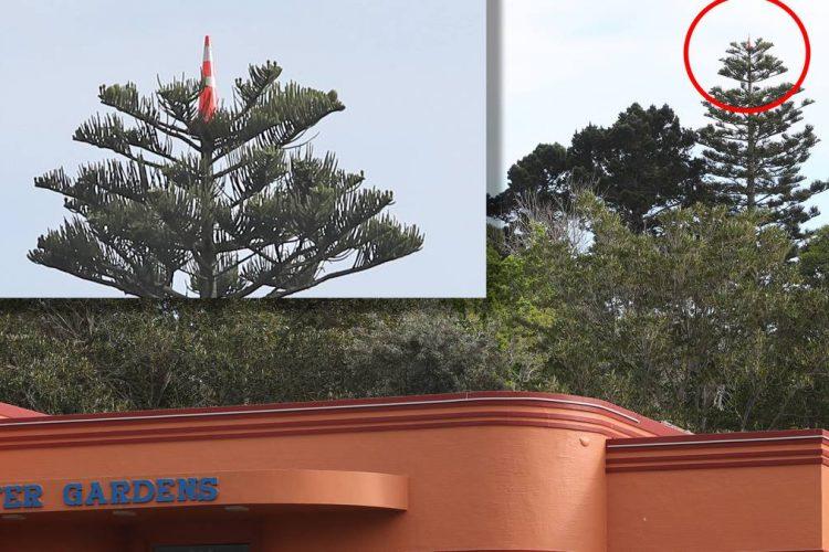 tree cone wars